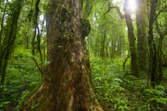 Tajlandia dżungla Fotografia Stock