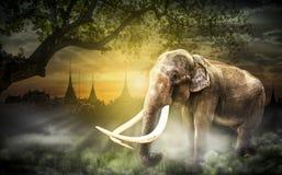 Tajlandia Elephent Zdjęcie Stock