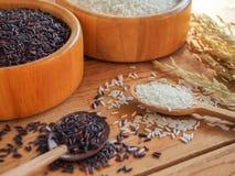 Tajlandia jaśminu ryż Zdjęcie Stock