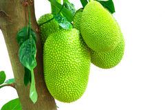 Tajlandia Jackfruit Zdjęcia Stock