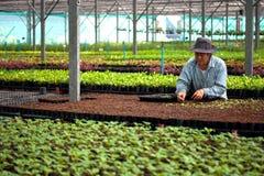 Tajlandia kobiety zasadzają drzewa w domu Obraz Royalty Free