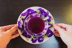 Tajlandia napoju Chan świeży zdrowy ziołowy sok z cytryna soku motyliego grochu kwiatem obrazy royalty free