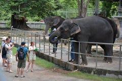 Tajlandia, Pattaya, 26,06,2017 gości karmi słonie przy zoo Zdjęcia Stock