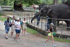 Tajlandia, Pattaya, 26,06,2017 gości karmi słonie przy zoo Obrazy Stock