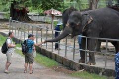 Tajlandia, Pattaya, 26,06,2017 gości karmi słonie przy zoo Obraz Stock
