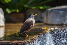 Tajlandia ptak fotografia stock