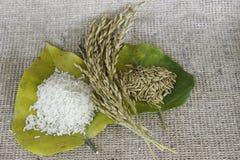 Tajlandia Rice Zdjęcia Stock