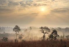 Tajlandia sawanny krajobraz przy wschodem słońca zdjęcie stock