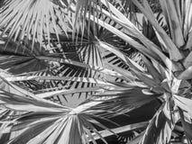 Tajlandia, tropikalni drzewa Obrazy Stock