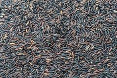 Tajlandzcy czarni jaśminowi ryż Obrazy Stock
