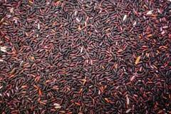 Tajlandzcy czarni jaśminowi ryż lub Rice jagoda tło Obraz Royalty Free