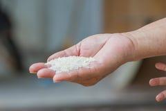 Tajlandzcy jaśminowi ryż na ręce. Zdjęcia Stock