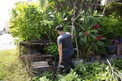 Tajlandzcy mężczyźni zaludniają uprawiać ogródek i ciąć przycinający gałęziastego Plumeria drzewa w ogródzie przy przodem dom prz zdjęcie stock