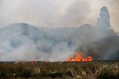 Tajlandzcy rolnicy palą słomę zdjęcia stock