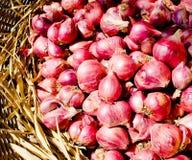 tajlandzka chiangmai szalotka cebulkowa czerwona Fotografia Stock