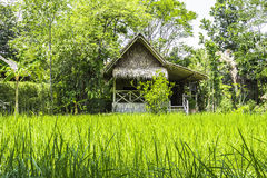 Tajlandzka średniorolna buda Obraz Stock