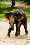 tajlandzka słoń balowa sztuka Zdjęcia Stock
