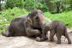 Tajlandzka słoń mama, dziecko i Zdjęcia Royalty Free