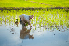 Tajlandzki średniorolny flancowanie obraz stock