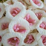 Tajlandzki Żałobny kwiat & x28; sztucznego kwiatu use dla cremation& x29; Obrazy Stock