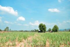 Tajlandzki gospodarstwo rolne Obraz Stock