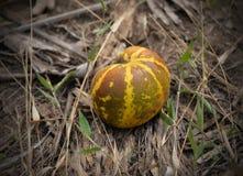 Tajlandzki kantalupa melon zdjęcie royalty free