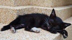 Tajlandzki kot śpiący Zdjęcia Royalty Free