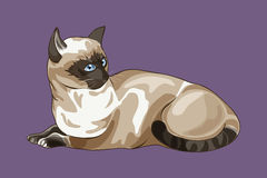 Tajlandzki kot na purpurowym tle Obraz Stock