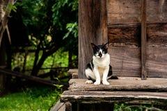 Tajlandzki kot na starym drewnianym domu Obraz Royalty Free