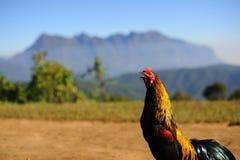 Tajlandzki kurczak Obraz Stock