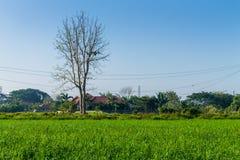 Tajlandzki rolnictwo Zdjęcie Royalty Free