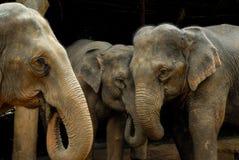 Tajlandzki słoń fotografia stock
