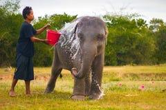 Tajlandzki słoń w naturze Obraz Stock