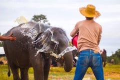 Tajlandzki słoń w naturze Zdjęcia Stock