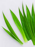 Tajlandzki ziołowy składnik dla tajlandzkiego deseru i zdrojów aromatherapy pa fotografia stock