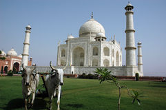 Tajmahal de India. Foto de Stock Royalty Free
