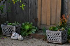 Tajny ogród z tajemnicy drzwiowy prowadzić cudowny świat zachwyt Zdjęcia Stock
