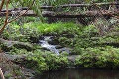 Tajor Waterfall. Bako National Park, Sarawak, Malaysia Stock Photos