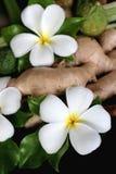 tajski kwiaty Zdjęcia Stock