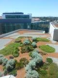 Taköverkantträdgård på Fiona Stanely Hospital Perth fotografering för bildbyråer