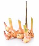 także jako tła różnego smaku karmowy galangowy imbirowy znacząco składników kai kung s odoru specice taki tajlandzki tomkha tomya Fotografia Royalty Free