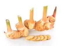 także jako tła różnego smaku karmowy galangowy imbirowy znacząco składników kai kung s odoru specice taki tajlandzki tomkha tomya Obrazy Royalty Free