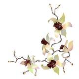 Tak 4 van de orchidee Royalty-vrije Stock Foto