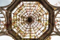 Tak av den kupolformiga pergolan med Autumn Crimson Glory Vine fotografering för bildbyråer