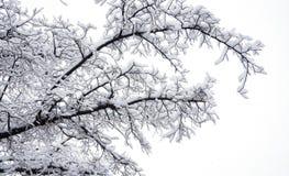 Tak die door sneeuw behandelen Royalty-vrije Stock Foto