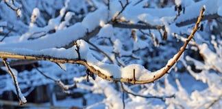 Tak die met sneeuw wordt behandeld Royalty-vrije Stock Afbeeldingen