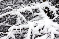 Tak die met sneeuw wordt behandeld royalty-vrije stock foto's