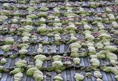 tak med mossa och rimfrost Royaltyfri Fotografi