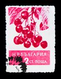 Tak met bessen, Prunus-avium, Vruchten serie, circa 1956 Stock Foto