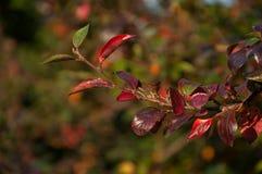 Tak met bladeren Stock Afbeeldingen